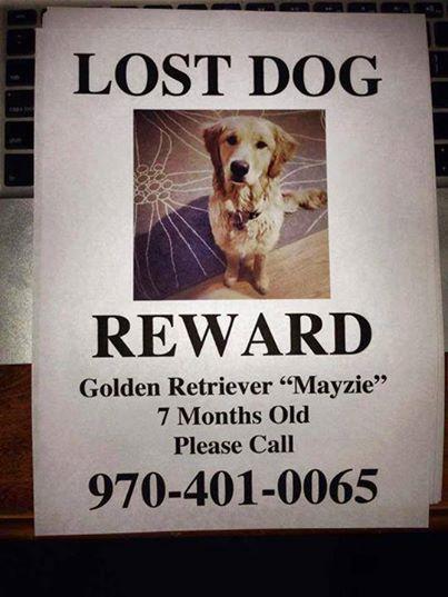 10251975_689179314481309_7122248190560661714_n  Lost Pet Poster